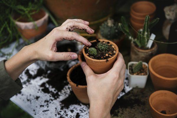 Organic Gardening: Water Matters