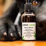CBD Oil for Dogs: Everything You Need to Know